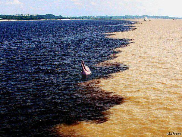 Рио негро и амазонка