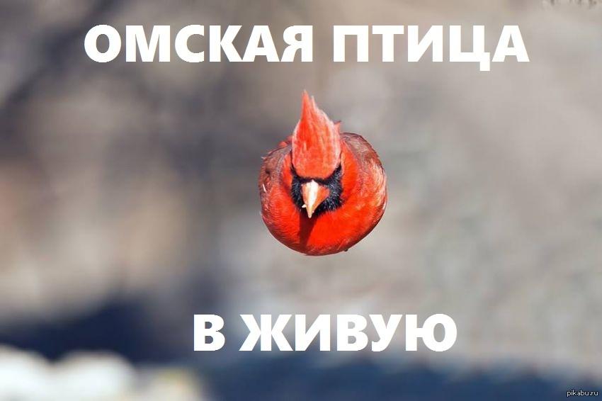 сели картинки с птицей омская птица грязевые источники
