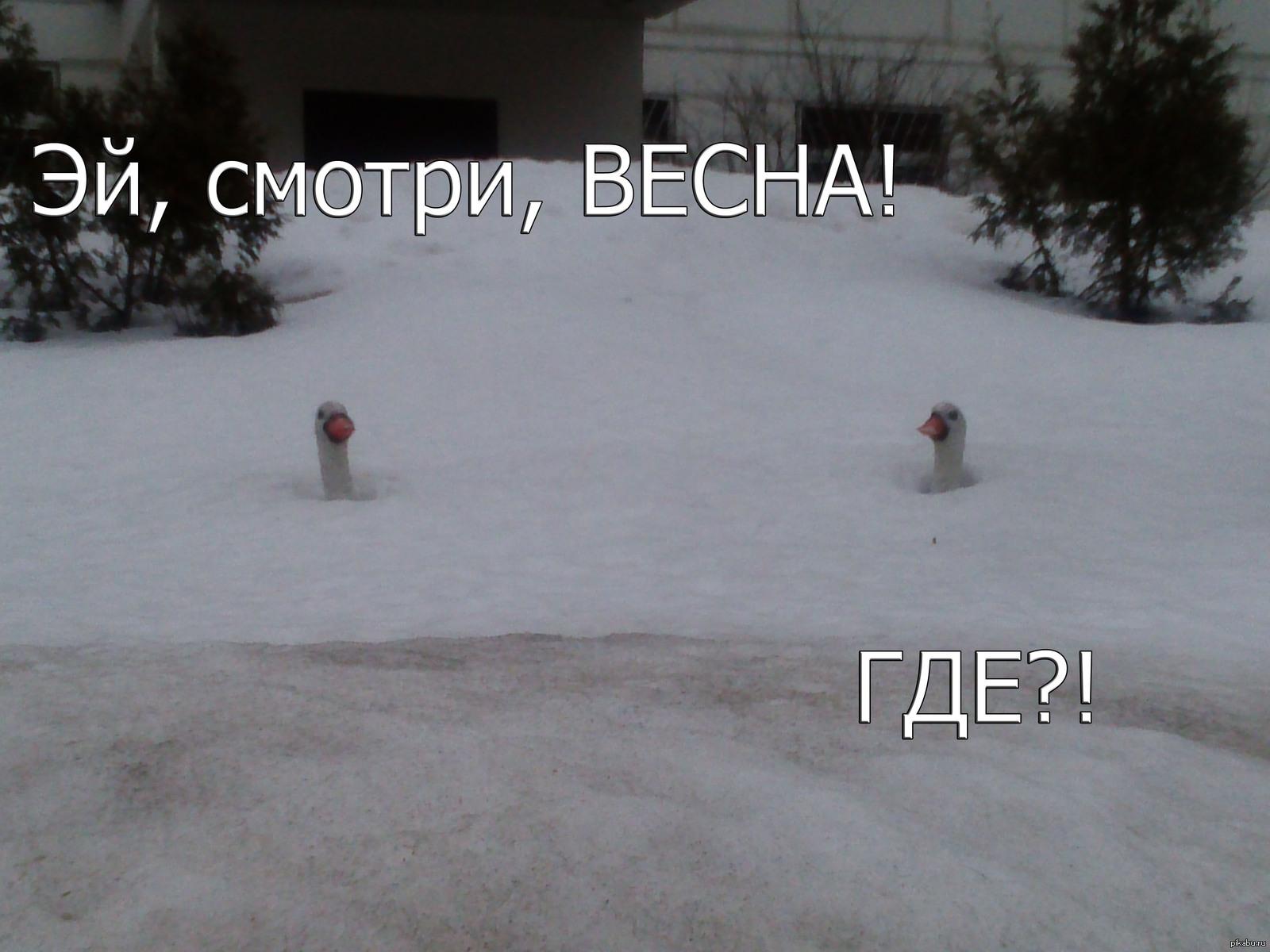 Смешная картинка снег в апреле, ручной работы