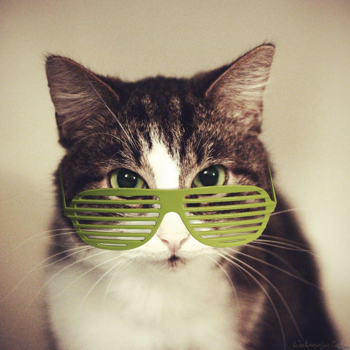Крутые картинки на аву кошки