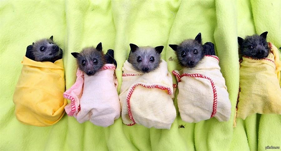 Летучие мыши тоже могут быть милыми | Пикабу