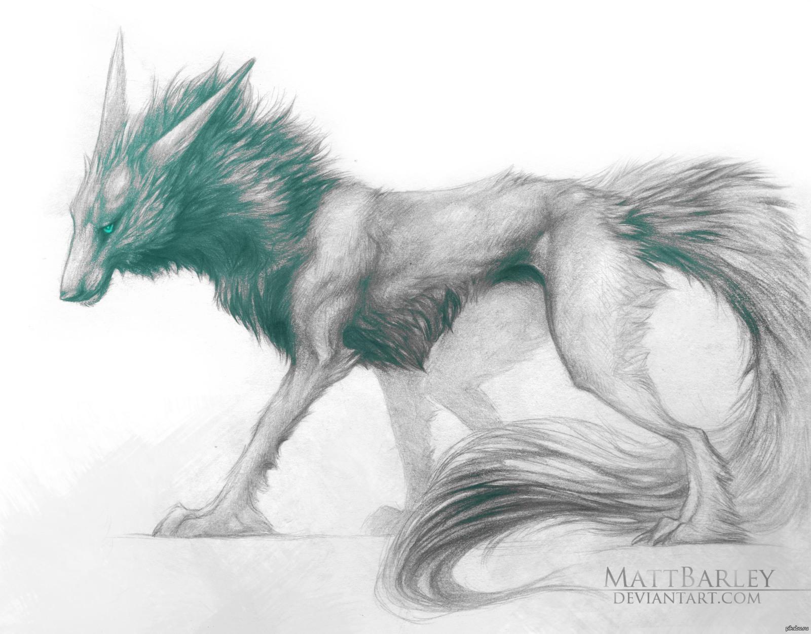 бедра картинки волка молний карандашом людям свойственно удивительное