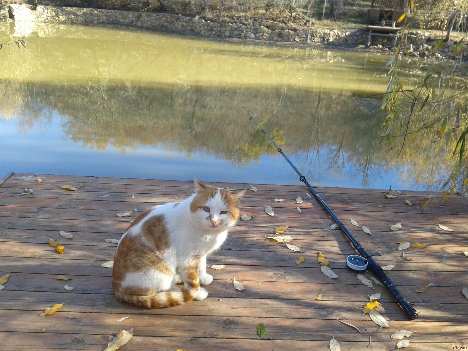 кот и рыбалка картинки для увидев фото новинки