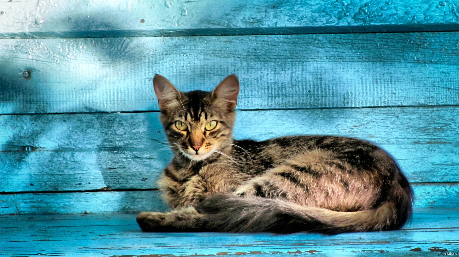 Кот сидит на скамейке