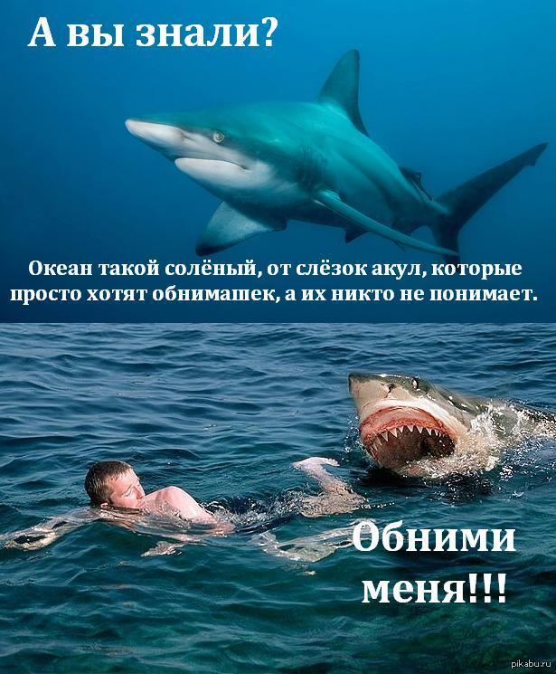 стоит приколы про акул фото вас новогодний