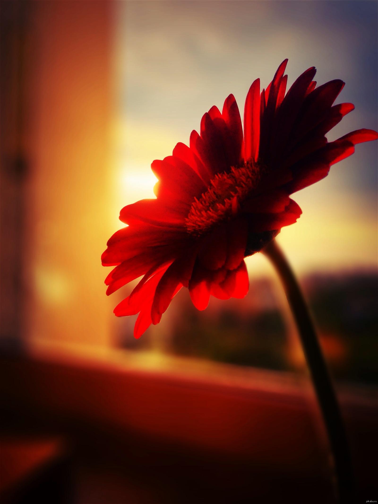 цветы картинка одинокая очень больна