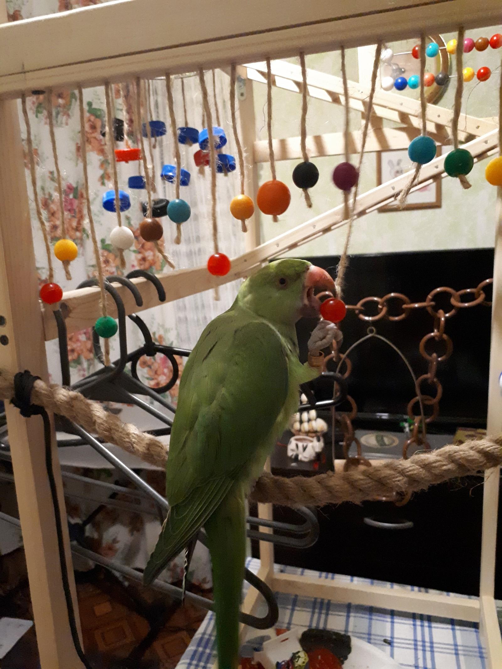 Кольца для попугаев своими руками