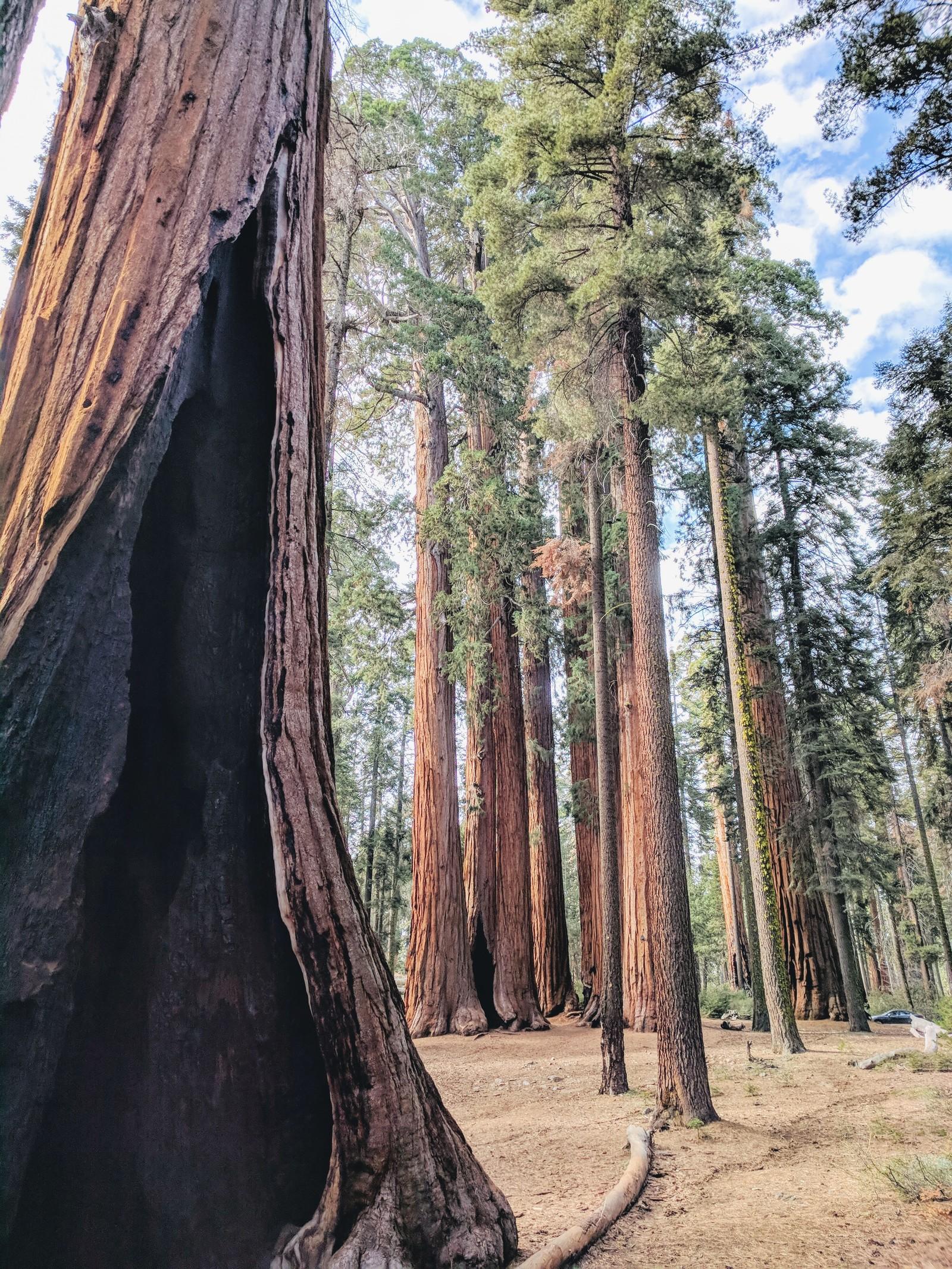 Обои сша, туман, национальный парк редвуд, калифорния. Природа foto 16