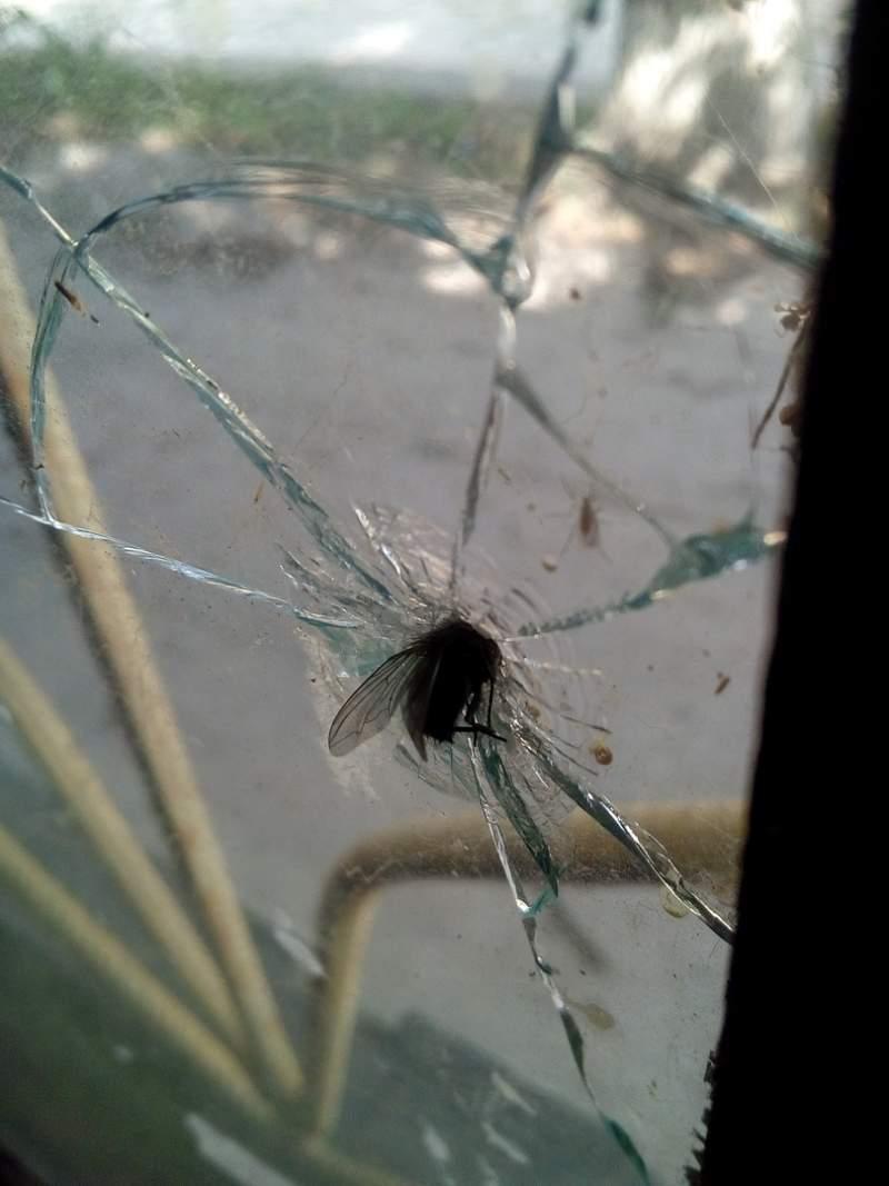 Открытка за вдв с мухой