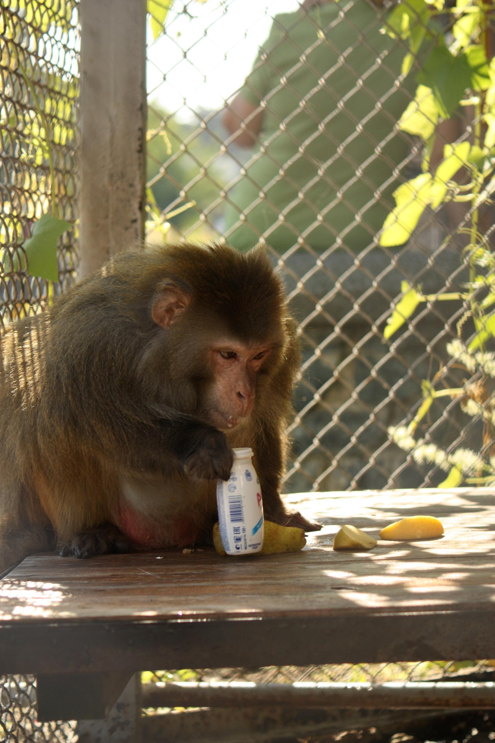 Маленькая обезьянка с хуем во рту