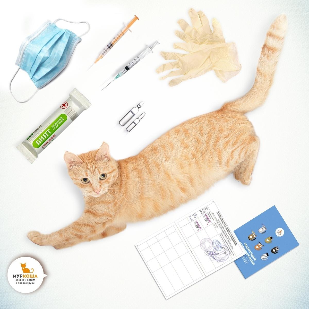 первые прививки кошкам