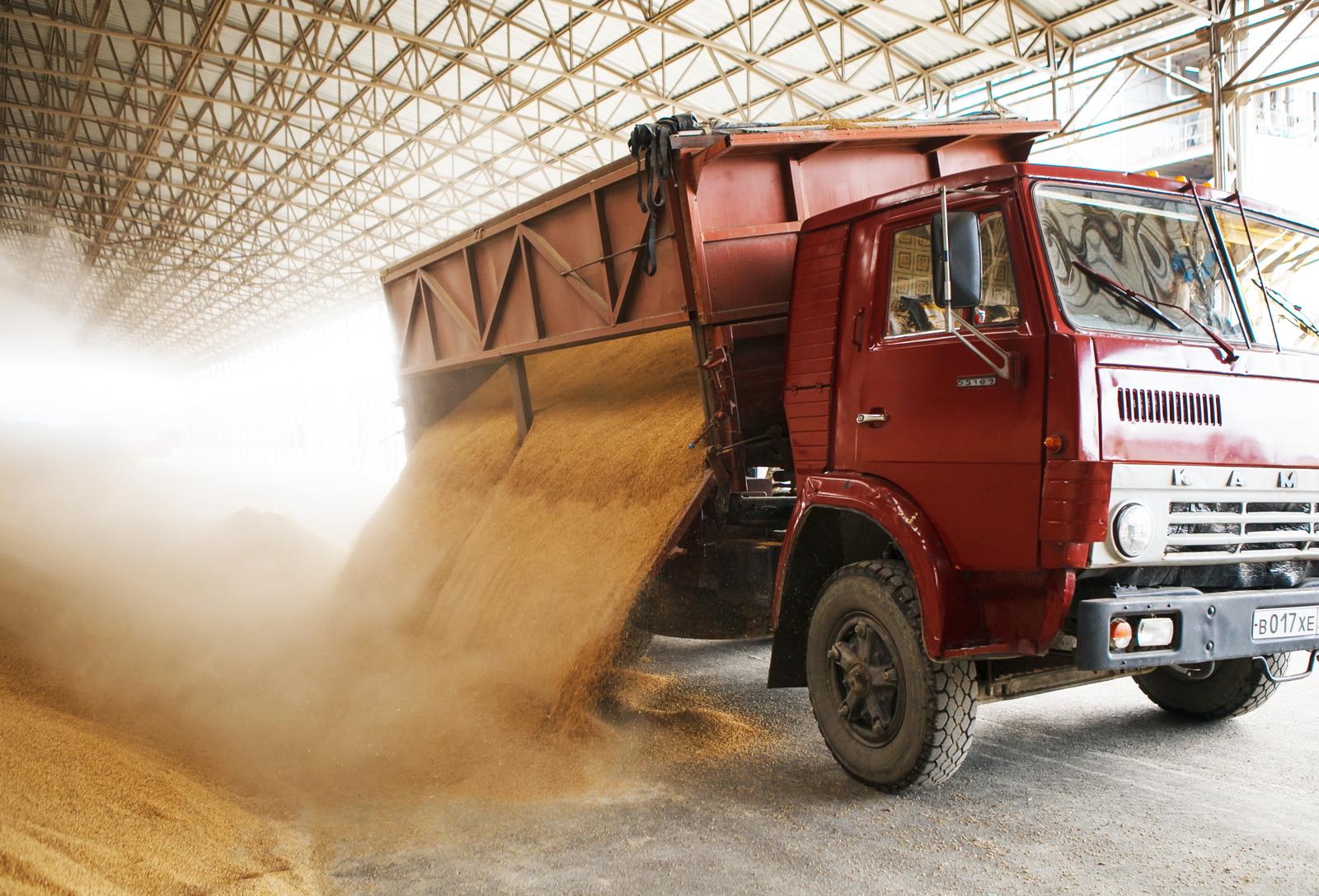 Как выращивают рис в России выращивание