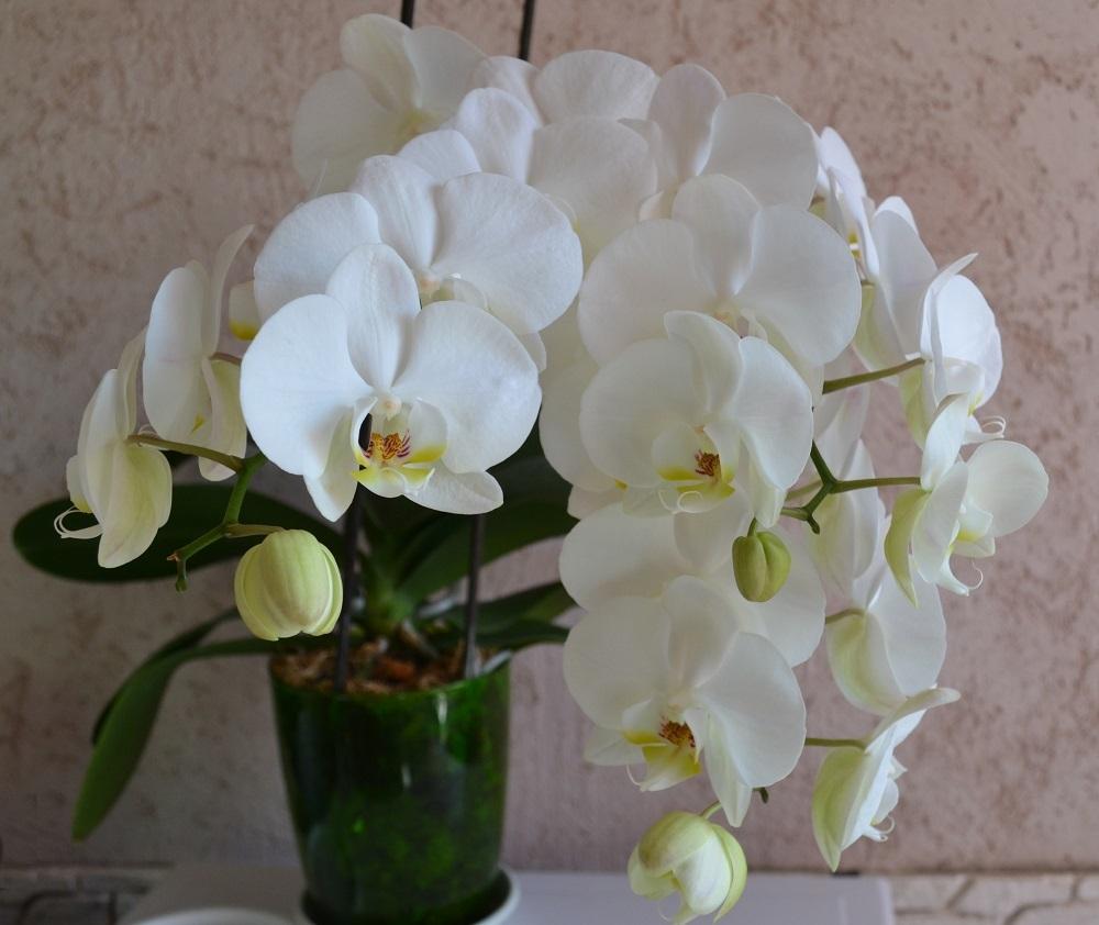 Каталог цветов сарос дизайн