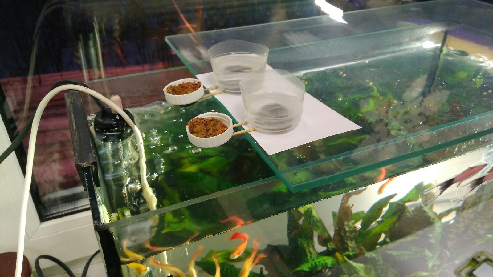 Кормушка для рыбок в аквариуме своими руками фото 112