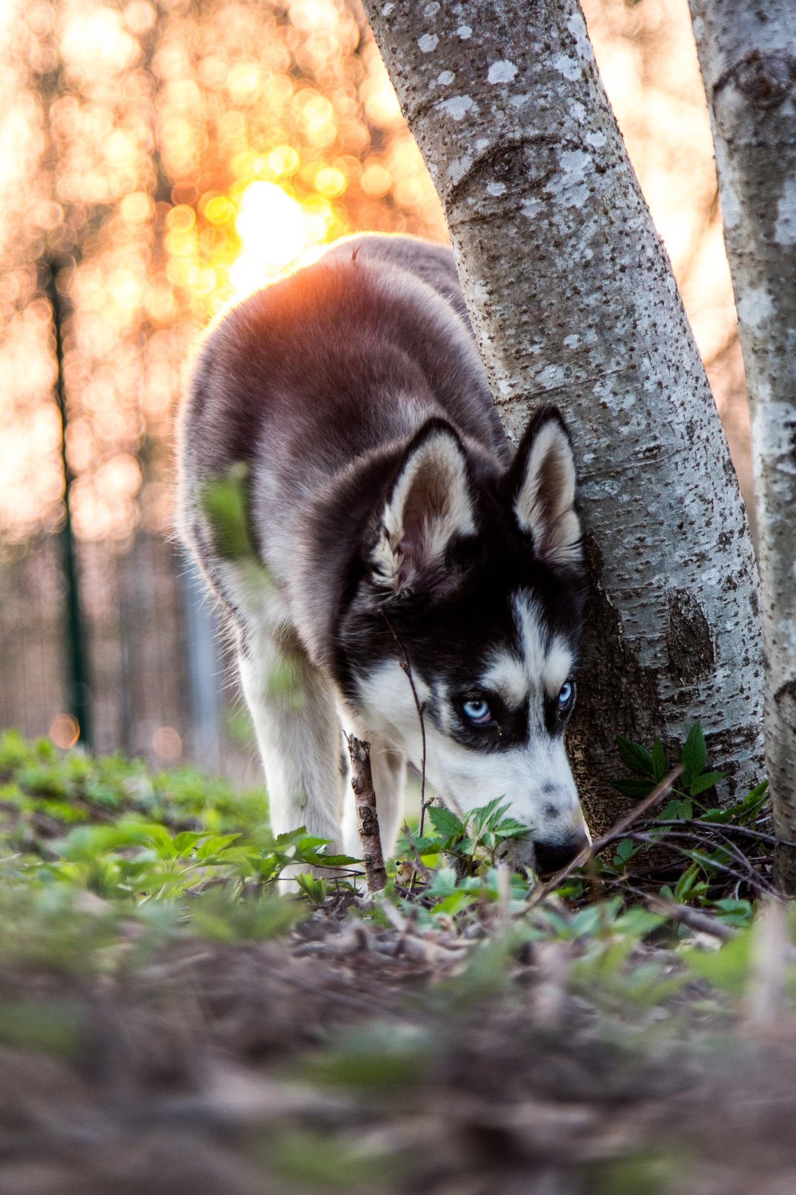 фото собак крутых
